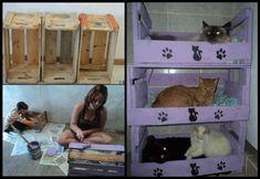 #DIY Cat bunk bed