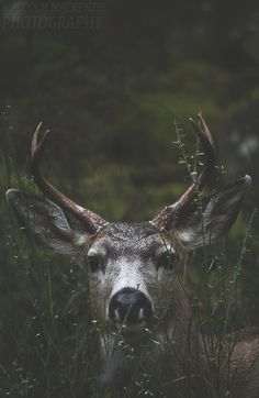 Imagen de animal, deer, and nature