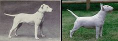 "Great article that shows the actual results of 100 years of dog breed ""improvement"""