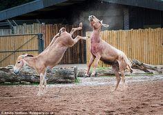 Bildergebnis für ismael wild donkey images
