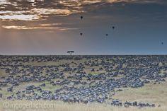 Endless sky.   Masai Mara.   Kenya.    www.ingogerlach.com