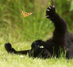 Kitty playing with butterfly