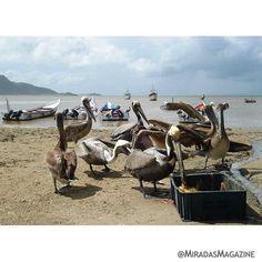 Las hermosas escenas de nuestra costa  #PuertoPiritu Anzoátegui. . . #Miradas2doAniversario #MiradasMagazine #Miradas #RutaGourmet #MiradaFotografica #Anzoategui #Lecheria #Mochima #AGDisenoGraf #NegociosEfectivos20 #Marketing #LoveMarketing #Publicidad #LoveMark #Turismo #Tecnologia #Revista #RevistaDigital.
