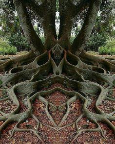 Very unique roots
