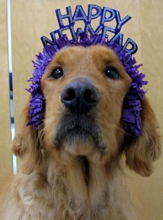 Have a happy and safe New Year! http://www.thepoophappens.com