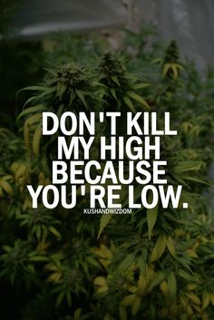 Don't kill my high