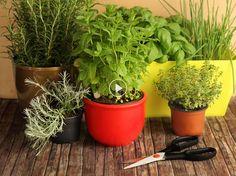 Que l'on possède un bout de jardin ou simplement un rebord de fenêtre, la jardinière de plantes aromatiques est idéale pour parfumer ses petits plats en...