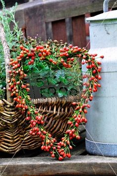 heart-shaped wreath of rosehips. Make with those red tipped green thingeys you buy at Michael's after Christmas for 90 percent off.  Use a heart shaped grapevine wreath. I'll do it this year.