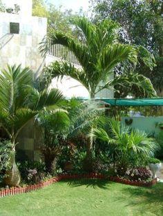 "Landscaping photo of ""Tropical garden"" posted by zeeshanuddin - Garden Deko Florida Landscaping, Florida Gardening, Tropical Landscaping, Landscaping With Rocks, Outdoor Landscaping, Front Yard Landscaping, Outdoor Gardens, Landscaping Ideas, Backyard Ideas"