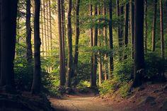 Kostenloses Bild auf Pixabay - Wald, Bäume, Weg, Grün, Umwelt