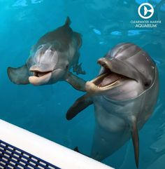 Winter and Hope Dolphin Tale 2, Animal Pictures, Cute Pictures, Animals And Pets, Cute Animals, Clearwater Marine Aquarium, Baby Dolphins, Bottlenose Dolphin, Ocean Creatures