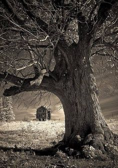 Photograph of old oak in foreground and abandoned farmhouse in background. The history of this place beckons.