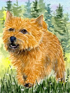 Norwich Terrier 2-Sided Garden Flag