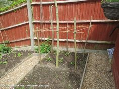 Growing Vegetables – The Good Life in Waterlooville – Update – May 2015