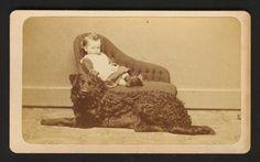Super RARE CDV Photo Curly Coated Black Retriever Dog Child 1870 Lebanon NH | eBay