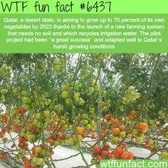 Qatar is trying to grow food in the desert - WTF fun facts