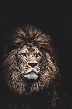"""""""Rise and rise again until lambs become lions."""""""