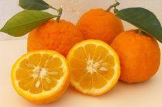 Apelsindieten för viktnedgång och hälsa - Steg för Hälsa