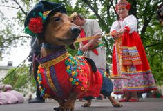 Dachshunds parade in Russia. Look through the post, some of these costumes are amazing.