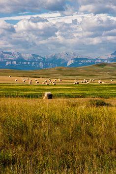 Hay bales in Montana by Janice Nolan Braud ( my home state) Big Sky Montana, Montana Living, Montana Homes, Montana Ranch, Wonderful Places, Beautiful Places, Laramie Wyoming, Cody Wyoming, Paisajes