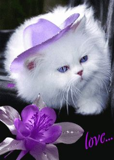 How To Draw A Cute Animals Step By Step into Cute Animals Wallpaper For Android Phone if Cutest Kittens And Puppies Ever half Funny Videos Of Cute Baby Animals Cute Kittens, Pretty Cats, Beautiful Cats, Cute Baby Animals, Animals And Pets, Photo Chat, White Cats, Baby Cats, I Love Cats