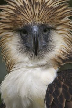 'The depth and narrowness of the eagles? bill is unique among birds.' by National Geographic