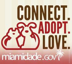 .#MIAMI #DADE #FLORIDA #SOUTH #BEACH #animal #advocate #adopt #foster #donate #pledge #betheirvoice #savealife #safe #rescue #dogs #cats #control #pound #shelter #kitten #kittens #furbaby #furbabies #furever #fureverhome #home #save #wetnose #paws #tails #bestbuds #mansbestfriend #spay #neuter #adoptdontshop #end #report #abuse #neglect #nokillnation #nokill #shelter #pet #crosspost #puttosleep #PTS #destroyed #kill #murder #putdown #puttodeath #sentencedtodeath #euth #list #euthanasia