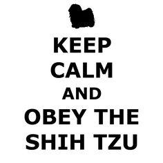 Keep Calm and Obey The Shih Tzu.