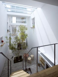 I want a tree in my house! House in Japan by Mamm design. Breathtaking.