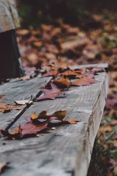 Free stock photo of bench, leaves, autumn, fall