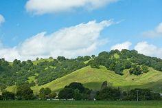 fairfield ca | The green hills of Fairfield, California | CALIFORNIA DREAMS