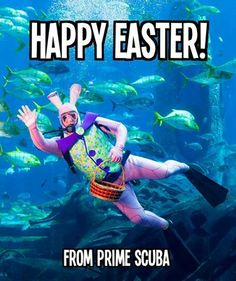 Underwater egg hunt, anyone?? Happy Easter to all who celebrate! https://www.facebook.com/likeprimescuba