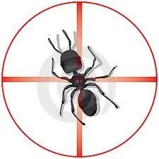 Backyard Pest Control: Call us at Facility Pest Control for outside maintenance sprays that are eco-friendly, cost efficient and will rid your yard of pesky critters.