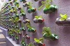 Αποτέλεσμα εικόνας για φυτα στον τοιχο μπουκαλια