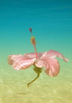 Hawaii Palm Tree Pics, Mahalo Hawaii, Beach Bodys, Photography Beach, Spring Images, Life Hacks, Hawaiian Flowers, World Images, Light Spring