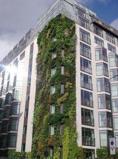 Green Wall – Athenaeum Hotel – Green Park- London