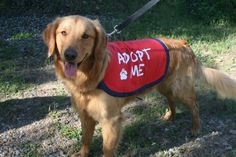 "Sew to serve animals in need by stitching up ""Adopt Me"" vests for your local shelter."
