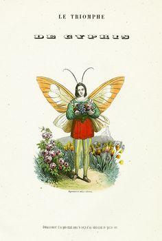 Varin Papillons 1852