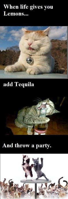 Better get me some tequila! - good advice from the cats kitty humor Tap the link for an awesome selection cat and kitten products for your feline companion! Funny Mom Memes, Funny Animal Memes, Funny Cat Videos, Cat Memes, Funny Animals, Funny Stuff, Funny Shit, Crazy Animals, Dog Stuff