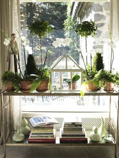 I know this technically isn't in my garden, but I wanted to share anyway! This glass table is in my dining room - my gardening books are displayed underneath, and on top, I always have orchids, some topiaries, and some flowers from the garden in my antique terrarium!   Photo (C) Nancy E. Hill
