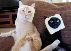cats with bread on their face