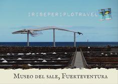 Museo del Sale a Salinas del Carmen, Fuerteventura Wind Turbine, Iris, Museums, Bearded Iris, Irises