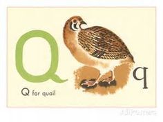 Quail Prints and Posters - Bing images