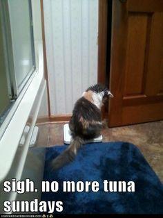 Tuna Sundays....sigh...