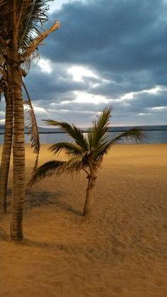 Playa de las canteras  (gran canaria )