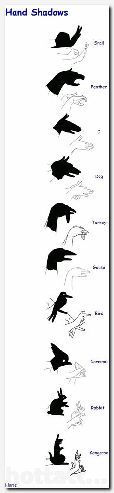The nearly lost art of hand shadows, or shadow puppets. Stuff To Do, Things To Do, Cool Stuff, Kid Stuff, Activities For Kids, Crafts For Kids, Children Crafts, Diy Crafts, Sensory Activities