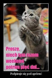 Znalezione obrazy dla zapytania życzenia na piątek i weekend Cute Baby Animals, Animals And Pets, Funny Animals, Weekend Humor, Funny Mems, Paludarium, Man Humor, Funny Faces, Funny Cute