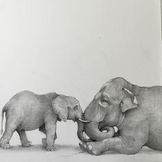 Connection. An Asian and African elephant if we are not careful we will lose these beautiful animals. #Adonnakhare #elephant #elephants #africanelephant #asianelephant #connection #sewing #string #conservation #wildlife #pencil #art #pencilart #nature #drawing #draw #drawingoftheday #animalart #drawanyway by adonnakhare