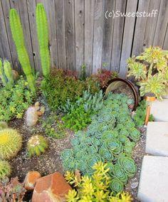 Cactus Amp Succulent Rock Garden Design At Sherman Gardens