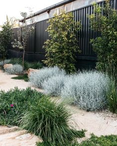 A simply beautiful contemporary Australian native Garden done so well. Garden design Plants supplied by A simply beautiful contemporary Australian native Garden done so well. Garden design Plants supplied by garden inspiration Australian Garden Design, Australian Native Garden, Contemporary Garden Design, Garden Landscape Design, Landscaping Plants, Front Yard Landscaping, Coastal Landscaping, Farmhouse Landscaping, Back Gardens